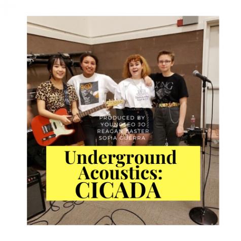 Underground Acoustics: Cicada